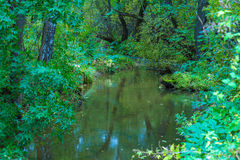 Banks of small forest rivers in the summer Royalty Free Stock Photography