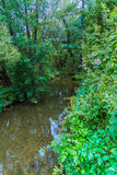 Banks of small forest rivers in the summer Stock Photos