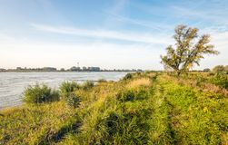 On the banks of a wide Dutch river. Picturesque image of the banks of the wide Dutch river Waal early in the morning in the beginning of the fall season Royalty Free Stock Photography