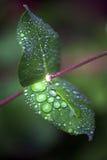 banksi liść trąbka Zdjęcie Royalty Free