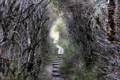 Free Banksia Royalty Free Stock Photos - 5073498