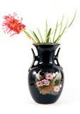 Banksia in een vaas Royalty-vrije Stock Fotografie