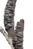 Banksia na de brand royalty-vrije stock foto