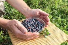Banksj jagody w szklanym talerzu w męskich palmach Obraz Stock