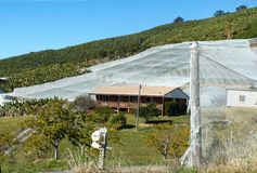 Bannana plantation with netting and greenhouses and residential house in New South Wales Australia. A Bannana plantation with netting and greenhouses and Royalty Free Stock Photos