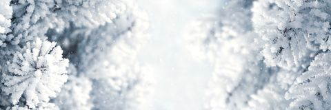 Free Banner 3:1. Winter Christmas Scenic Background. Snow Landscape With Spruce Branches Covered With Snow. Sky And Sunlight Through Royalty Free Stock Image - 147826696