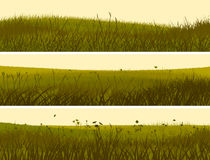 Banner of abstract meadow grass. Stock Photography