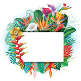Banner against a background of tropical flowers vector illustration