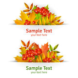 Banner, Autumn background or template card with yellow maple leaves and mountain ash berries Stock Photography