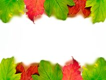 Banner autumn Colorful leaves isolated