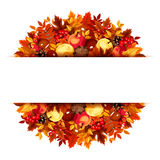 Banner with autumn leaves. Vector eps-10. Vector white banner with colorful autumn leaves, apples, chestnuts, cones and rowanberries Royalty Free Stock Image