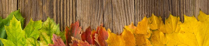 Banner of Autumn Time Background, Some fall leaves on weathered wood with copy space for your text. Banner of Autumn Time Background, Some fall leaves on stock image