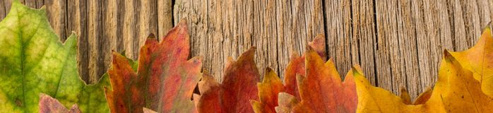 Banner of Autumn Time Background, Some fall leaves on weathered wood with copy space for your text. Banner of Autumn Time Background, Some fall leaves on Royalty Free Stock Photo
