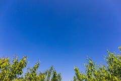 Banner, background image with blue sky, picture of green plants below, pollution free sky stock photos