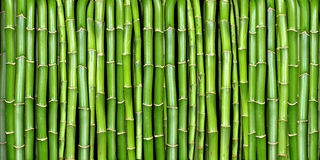 Banner of bamboo Royalty Free Stock Image