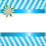 Banner in bavarian colors with edelweiss Royalty Free Stock Photos