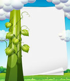 Banner with beanstalk Stock Images