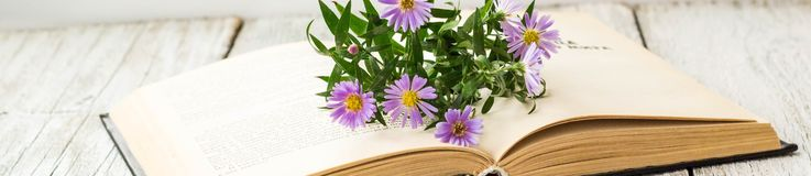 Banner of Blooming Virgin asters flowers on open book on window. Autumn summer background stock photo