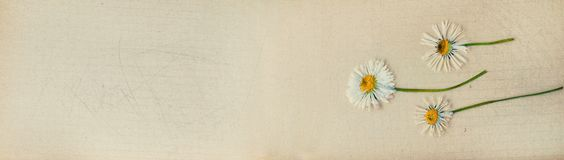 Banner with botanical eco design - web header template Royalty Free Stock Image