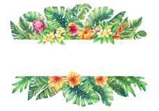 Banner with branches purple Protea flowers, plumeria, hibiscus and tropical plants. Hand drawn watercolor painting on white background royalty free illustration
