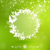 Banner with Butterflies. On a green background Stock Photo