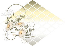 Banner with  Camomile.   Stock Photo