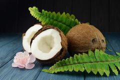 Banner coconut exotic fruit whole and half with leaves green royalty free stock images
