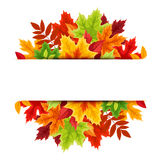 Banner with colorful autumn leaves. Vector illustration. Stock Photography