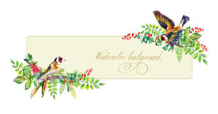 Banner with colorful watercolor  goldfinch and some leaves, berr Stock Photos