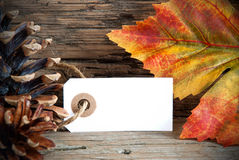 Banner with Copy Space and Autumn Decoration Royalty Free Stock Image
