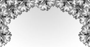 Banner Desert Rose on black and white Stock Images