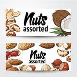 Banner design with coconut, cashew, peanut, hazelnut, almond, Brazil nuts Royalty Free Stock Photo