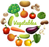 Banner design with fresh vegetables Royalty Free Stock Image