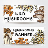 Banner design with various edible mushrooms and place for text. Banners with various edible mushrooms and place for text, sketch vector illustration on white Stock Photos