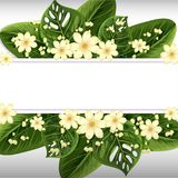 Banner design with white flowers and green leaves Royalty Free Stock Photos