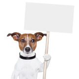 Banner dog Stock Images