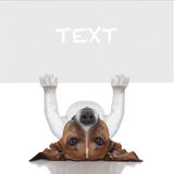 Banner dog. Dog under a white and blank banner holding it Royalty Free Stock Photo