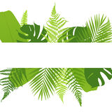Banner with ferns. Tropical leaves. Stock Photo