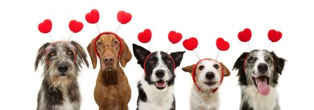 Banner five group dogs puppy love celebrating valentine`s day with a red heart shape diadem. Isolated on white background