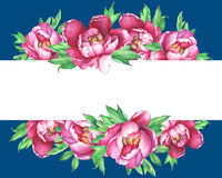 Banner with flowering pink peonies, isolated on  blue background. Stock Photography