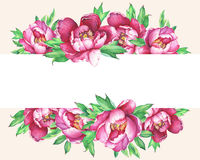 Banner with flowering pink peonies, isolated on peach background.