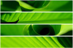 Banner - four natural leaf Stock Photography