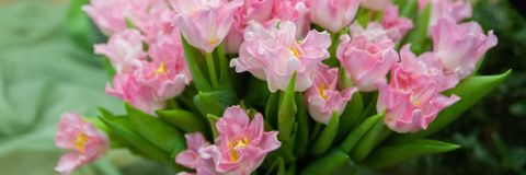 Banner frame beautiful pink tulips. Greeting card, Hello Spring and Woman day stock images
