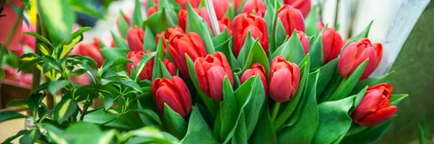 Banner frame Elegant red tulips. Greeting card, Hello Spring and Woman day stock photo