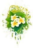 Banner with frangipani. Stock Photography