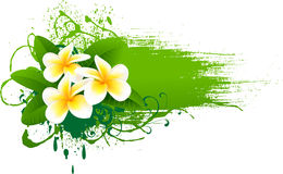 Banner with frangipani. Element for design  illustration Royalty Free Stock Photo