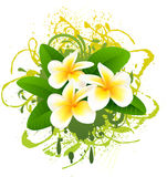Banner with frangipani. Royalty Free Stock Photo