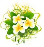 Banner with frangipani. Royalty Free Stock Photo