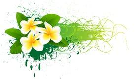 Banner with frangipani. Element for design  illustration Stock Image