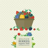 Banner with fresh berries and fruits. Concept organic food. Banner with different berries in basket. Concept organic farm fesh food. Vector illustration royalty free illustration